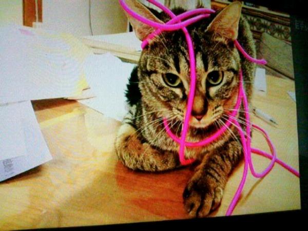 チアらんど-猫の日-1